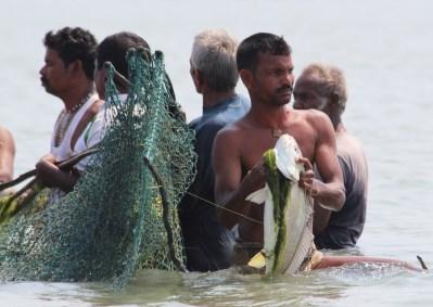 big fish, Chilika Lake