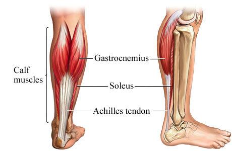 get-bigger-calf-muscles
