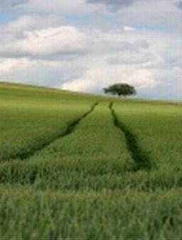 Un chemin tout tracé