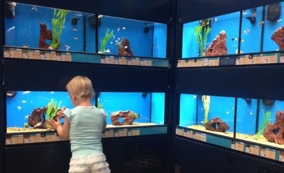 see the fish at petco