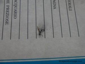 Moustique tigre tué avec mon livre sur les poissons acheté au Chateau de Miramare