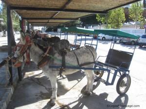 Balade en âne à Mijas
