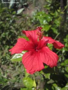 Fleur rouge Andalousie