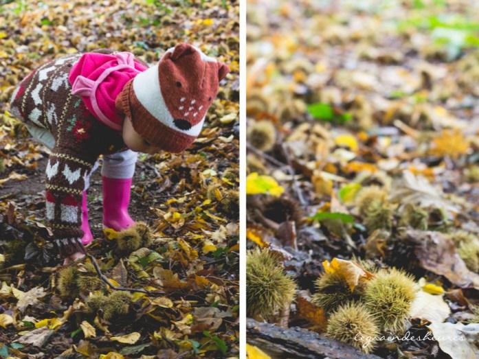 ramasser des châtaignes dans le bois