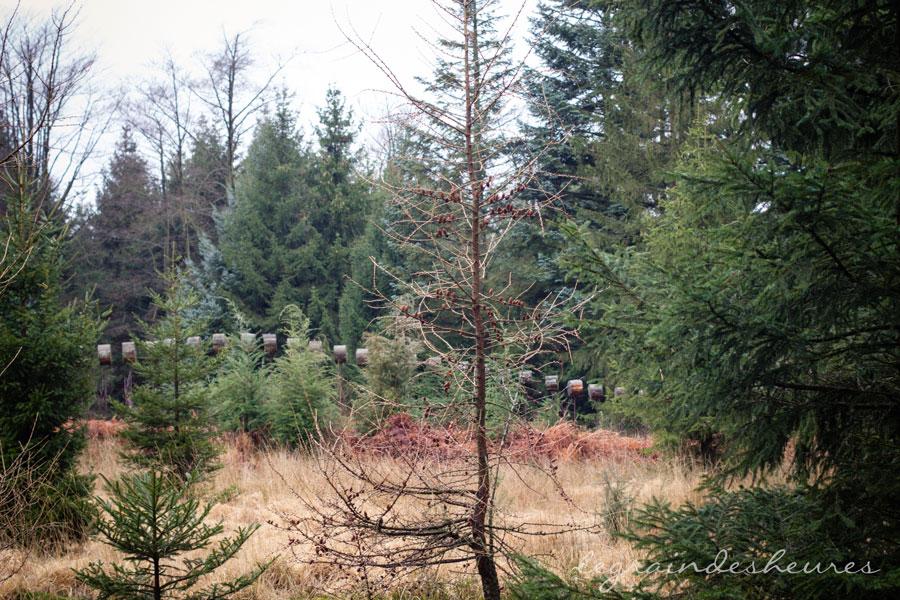 dans les bois, la fagne