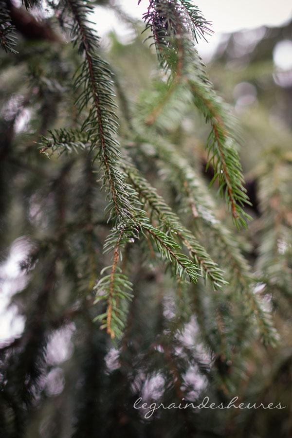 dans les bois, branche de sapin