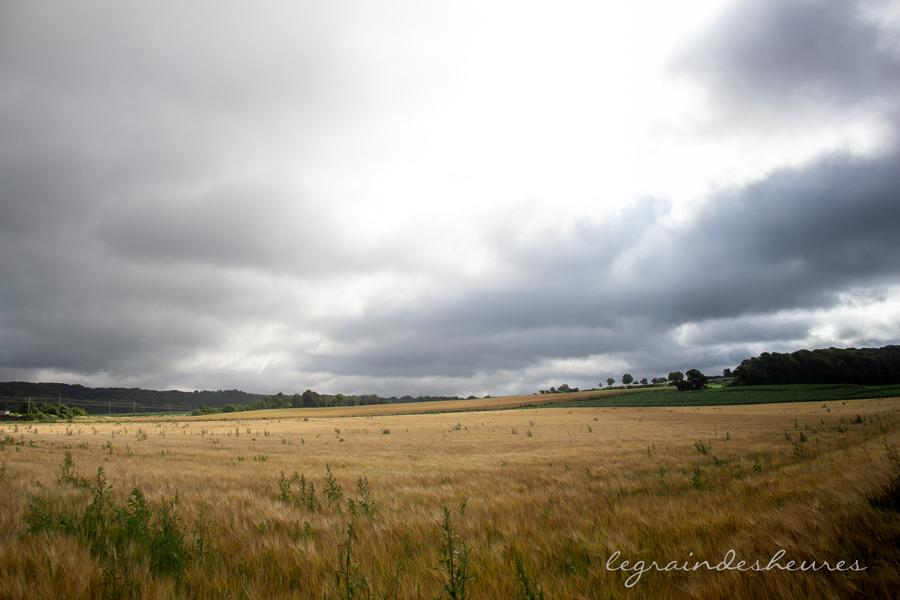 été warsage belgique champ de blé