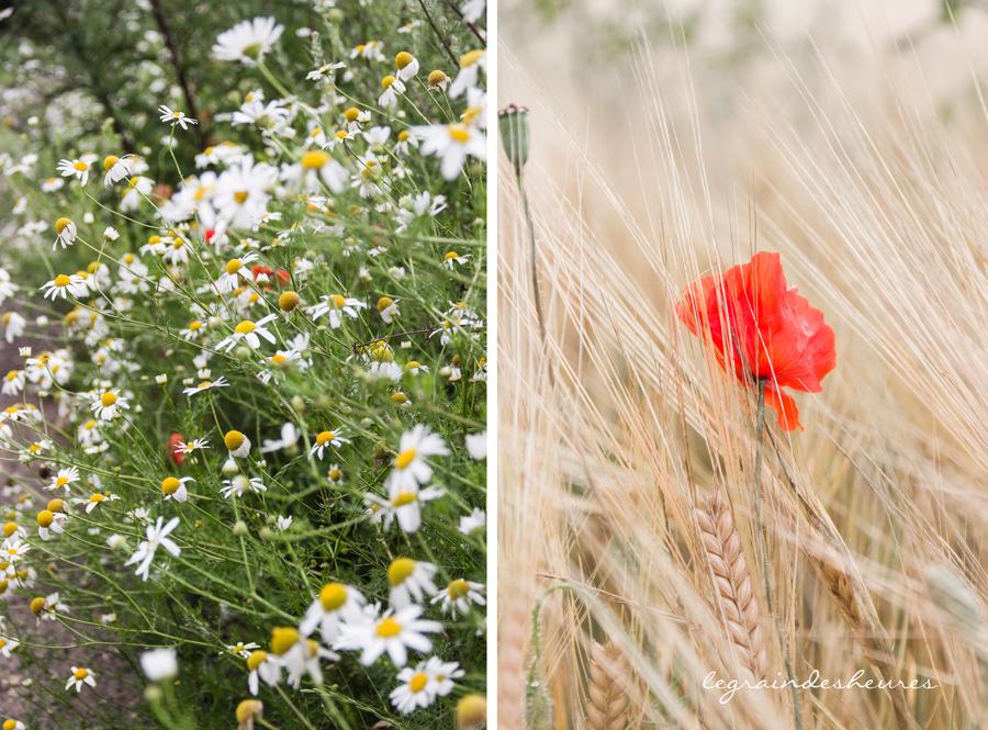 été-fleurs des champs