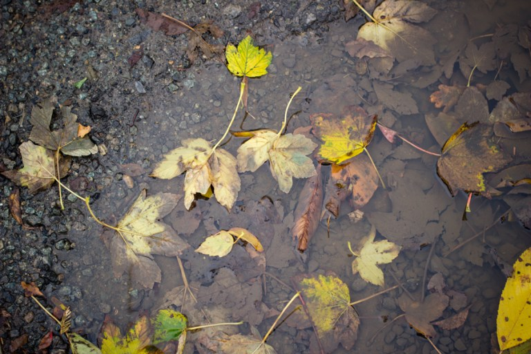 Flaques de boue