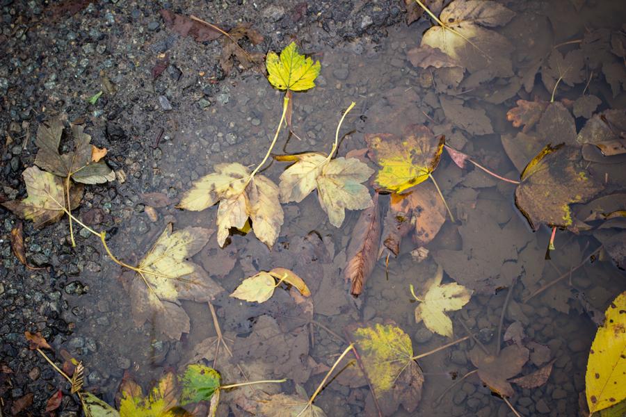 flaque et feuilles d'automne