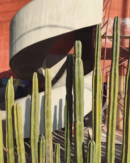 Cactus fence at Casas Gemelas