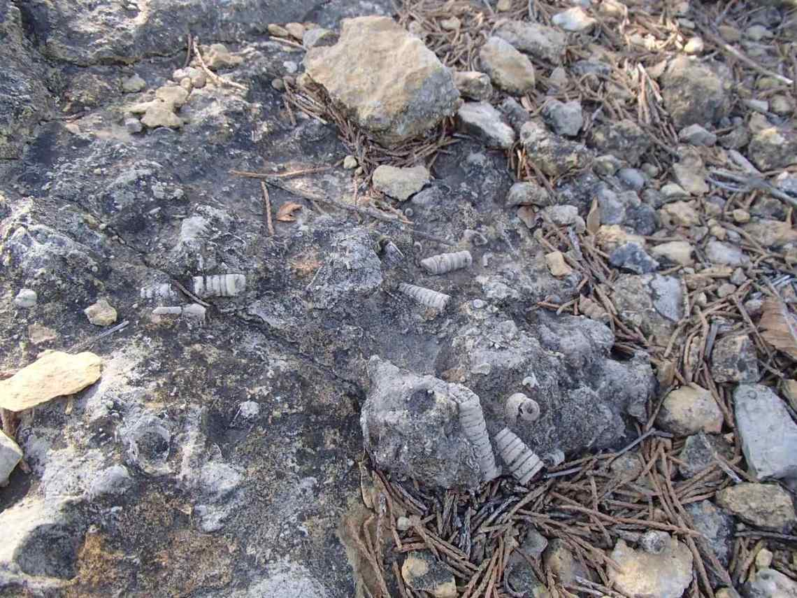 A variety of fossils in limestone at Lehigh Portland Trails.