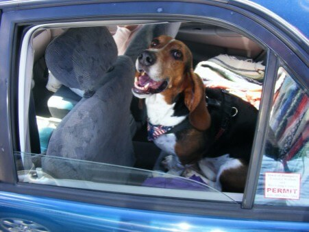 Marty happy in the old Corolla.