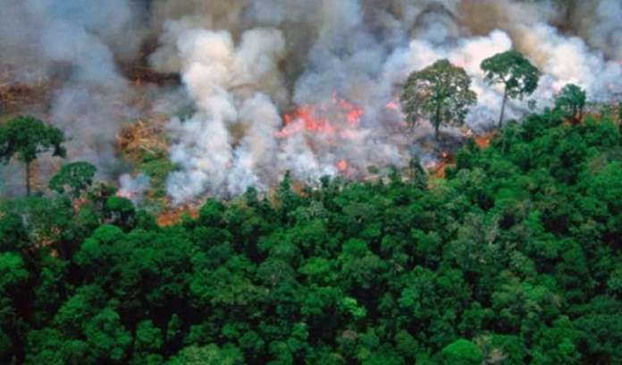 The blazing fire in the Amazon rain forest is a matter of serious concern
