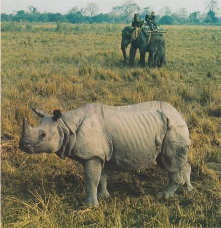 Filmszene in Indien. Es war damals wie heute spektakulär, von dem Elefanten aus das Panzernashorn zu filmen