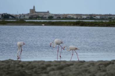 L1060371-klein-flamingo