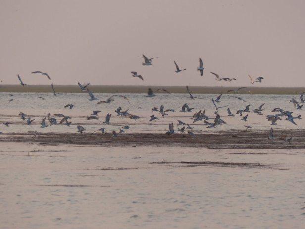 Blog-Vögel-abends-1025x769