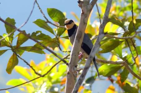 Fruithunter-male-Borneo-2017-3-klein