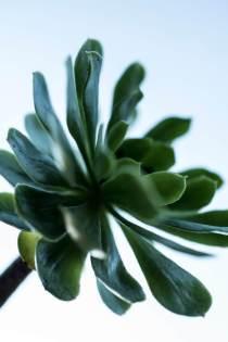 22_Plant-klein