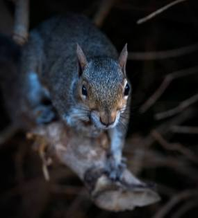 6_Squirrel-in-Cape-Town-Park-Kopie-klein