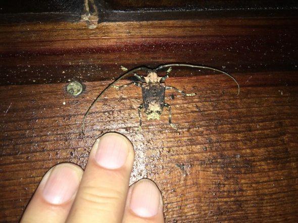 16-Beetle-1025x769-1