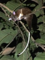 27-Central-American-Wooly-Opossum-769x1025-1