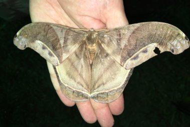 33-moth-1025x688-1