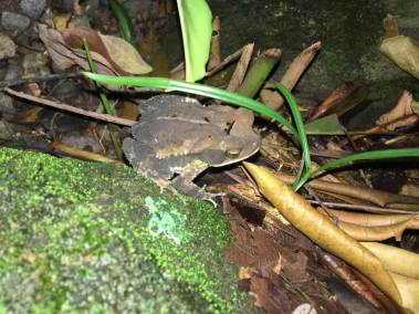 4-Gulf-Coast-Toad-1025x769