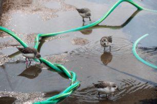Blog-Spoonies-water-1025x683
