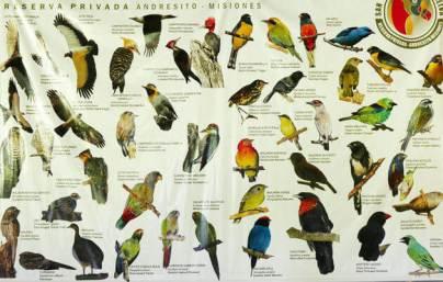 Species-list