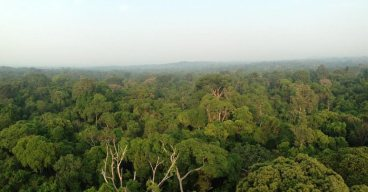 View-from-the-Canopy-1025x537