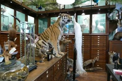 blog-tiger-1025x683