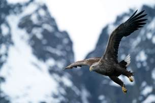 _LWM9059-klein-Adler
