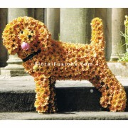 funeral-special-tributes-dog
