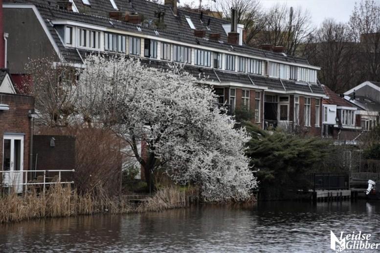 Haarlemmerweg (3)