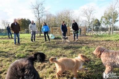 Honden speelveld Zoeterwoude (30)