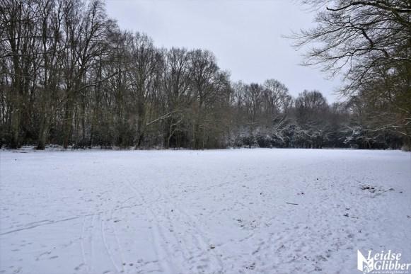 6 Sneeuw De Leidse Hout (30)