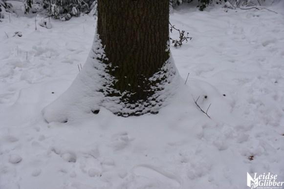 6 Sneeuw De Leidse Hout (14)