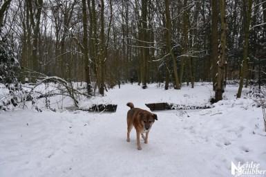 6 Sneeuw De Leidse Hout (10)