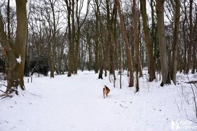 6 Sneeuw De Leidse Hout (4)