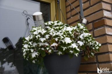sneeuw (67)