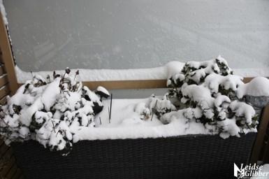 sneeuw (66)