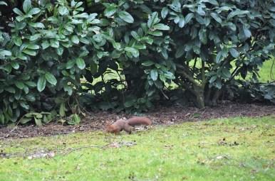 eekhoorn (4)