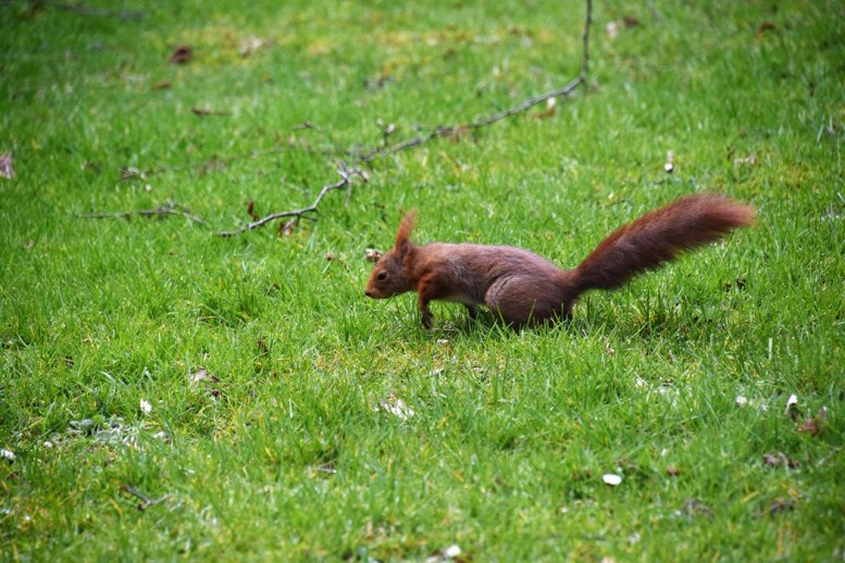 eekhoorn (9)