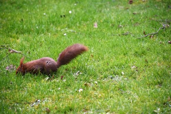 eekhoorn (10)