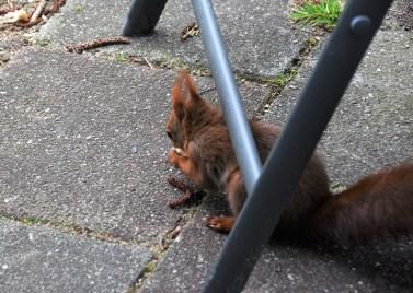 eekhoorn (14)