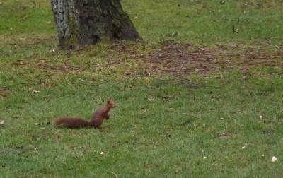 eekhoorn (19)