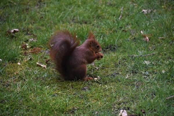 eekhoorn (24)