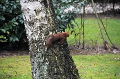 eekhoorn (27)