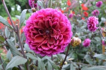 17.savillgardensflower7steveb